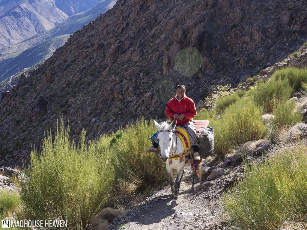 Berber man riding donkey in the Atlas Mountains with desert vegetation surrounding the path