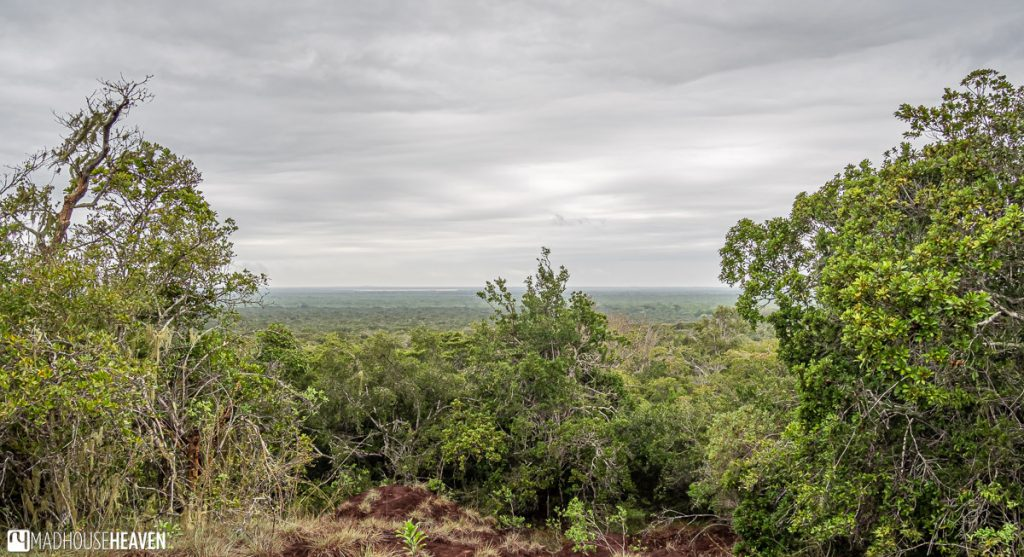 Panorama of a Dense Jungle from a Lookout Point in the Arabuko Sokoke Forest, Kenya