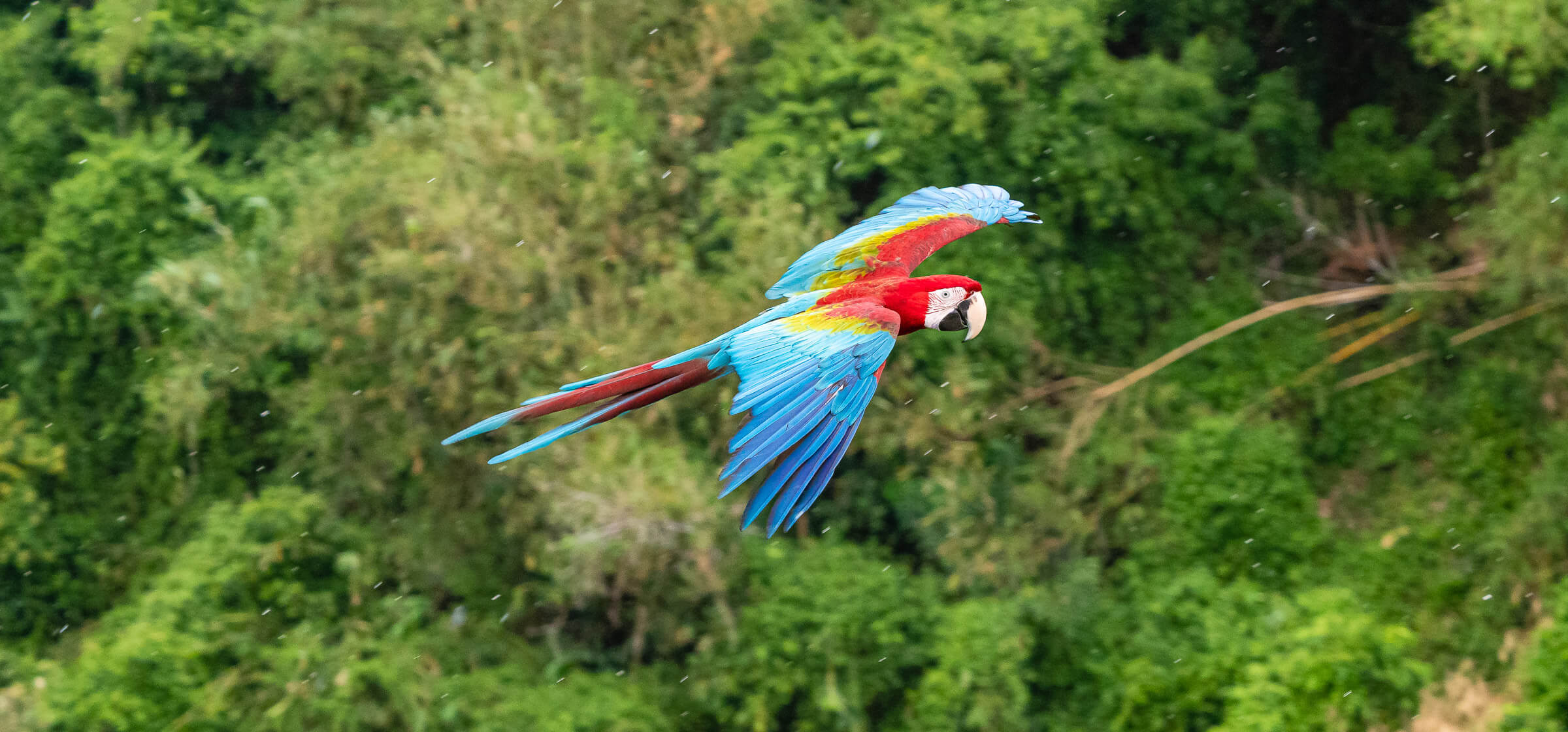 Macaw Parrot in Flight, Henderson Waves, Singapore
